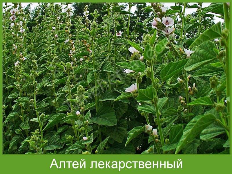 2329 АСКОРІЛ ЕКСПЕКТОРАНТ - Comb drug