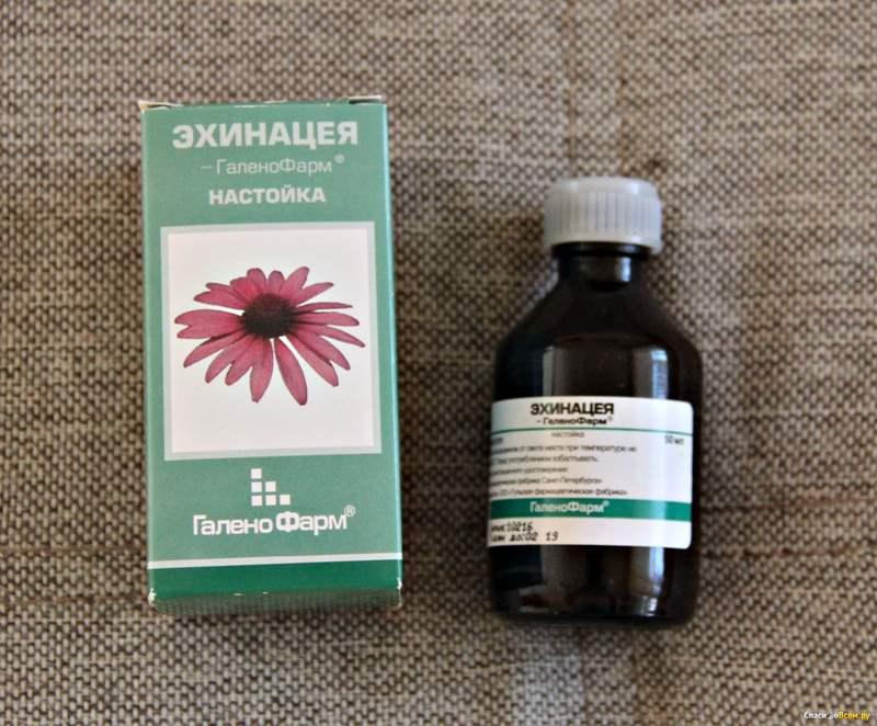 8763 ЕХІНАЦЕЯ-АСТРАФАРМ - Echinacea purpurea**
