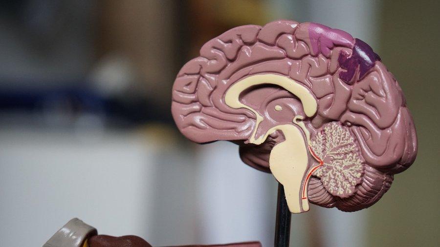 """25896 """"Коктейль"""" з антиоксидантів сприяє запобіганню хвороби Альцгеймера"""