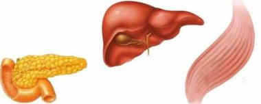26529 Обнаружена новая мишень лечения сахарного диабета