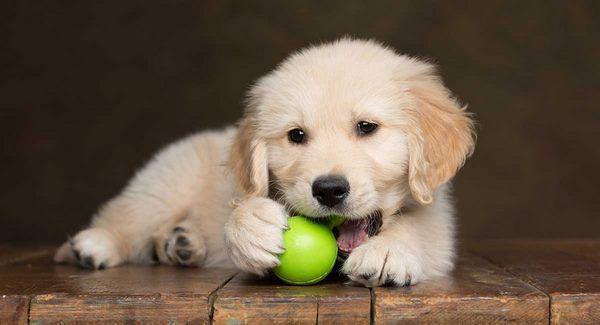 28161 Домашние животные помогают сдавать экзамены